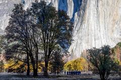 At the Foot of El Capitan (Kirk Lougheed) Tags: california elcapitanmeadow usa unitedstates yosemite yosemitenationalpark yosemitevalley autumn fall landscape nationalpark outdoor