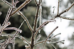 12/17/16 ice storm (karma (Karen)) Tags: baltimore maryland home backyard icestorm branches dof bokeh hbw 4winter topf27
