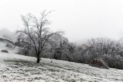 Z16_3994 LT (Zoran Babich) Tags: zagreb cityofzagreb croatia hr winter frost hrvatska
