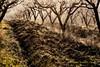 La foschia invernale è romantica... (Gianni Armano) Tags: la foschia invernale è romantica sole colli tortonesi monleale pescheto 30 dicembre 2016 foto gianni armano photo flickr