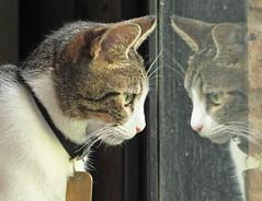 Kiwa (Marina-Inamar) Tags: felino reflejo observando curiosidad bigotes coth5