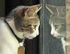 Kiwa (Inamar 1) Tags: felino reflejo observando curiosidad bigotes coth5