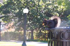 (paola_pensa) Tags: scoiattolo controluce allaperto allnaturesparadise