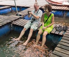 _B054780 Foot therapy.jpg (JorunT) Tags: fotbad fisk srilanka 2016 fiskespa maduganga elvesafari