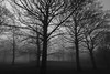 Trees in the fog ... (Barry Miller _ Bazz) Tags: fog foggy victoriapark widnes canon5dmark3 outdoorphotography sigma1224mm hsm dg