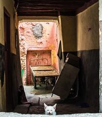 _DSC2180 (siegemund.martin) Tags: morocco azemmour