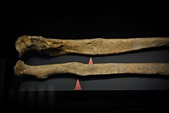 Viking exhibition in Tallinn, Estonia (umoilanen) Tags: bones archaeology history pathology