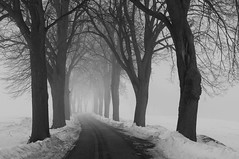 """the road to..."" (Karel Hrouzek P H O T O) Tags: tree landschaft landscape road path czech republic svitavy blackandwhite mono nikkor nikon black white monochrome fog mist haze winter frost snow rain foggy misty alley valley field mountains woods forest ice highlands ruby10"