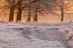 Heat of the moment (Pieter ( PPoot )) Tags: aekingerzand appelscha kaleduinen sunrise heat moment hoarfrost