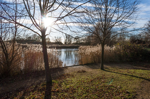 A Winter Scene at Bedfont Motte Lake
