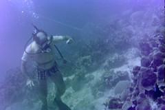 n0005.04 (avaragado) Tags: barbados coralreefclub fd197504 fd197604 fd197905 n0005 tonysmith