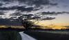 133-365v3 - Today's Sunrise (Mark Seton) Tags: dunmow essex uttlesford sunrise tree greatdunmow bigodslane