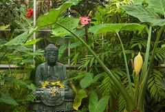 Buddha and flowers (Tim Ravenscroft) Tags: buddha foliage flowers selbygardens selby sarasota florida usa