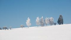 winterwhite (phreekz.chmee) Tags: white blue sky trees weiss minimalism lines nature panorama