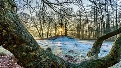 Wintersonne (webpinsel) Tags: kälte morgendämmerung münsterland dülmen eis landschaft natur sonnenaufgang wildpark winter morgens