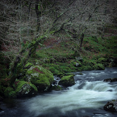 Torrent (Photo Lab by Ross Farnham) Tags: wales snowdonia stream water flowing sony a7rii 70200mm lee filters green trees
