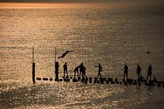 Gold (rienschrier) Tags: people summer zomer vakantie zonsondergang duiken sunset zwemmen
