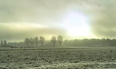 Frozen fields. (Alex-de-Haas) Tags: smorgens 50mm d5 hdr january nederland nederlands netherlands nikkor nikkor50mm nikon nikond5 noordholland schoorldammerbrug thenetherlands westfriesland bevroren bridge brug cold daglicht daylight fog foggy freezing frozen handheld haze hazy highdynamicrange januari kou koud landscape landschap licht light meadows mist misty morning nevel nevelig ochtend vrieskou weiland winter