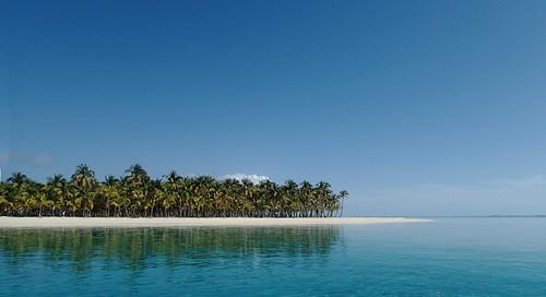 Palm Tree Nursery by jbylund, on Flickr