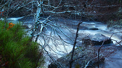 Waters of Winter (stephenb19) Tags: uk trees winter nature wet pine forest river landscape scotland waterfall woods long exposure december britain january falls flowing inverness damp contin rogie