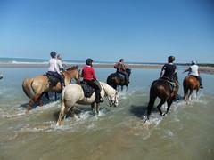 Randonne Equid'ext, plages du dbarquement, juin 2015 (tordouetspirit) Tags: horses france beach cheval juin omaha normandie normandy arromanches 2015 equidext httpwwwequidextfr quitationdextrieur