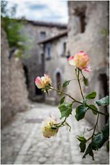 Streets of Santo Stefano di Sessanio ... (:: Blende 22 ::) Tags: old roses italy tree green bluesky abruzzo campoimperatore santostefanodisessanio abruzzen canoneos5dmarkii provinceoflaquila medievalhilltown ef2470f28liiusm