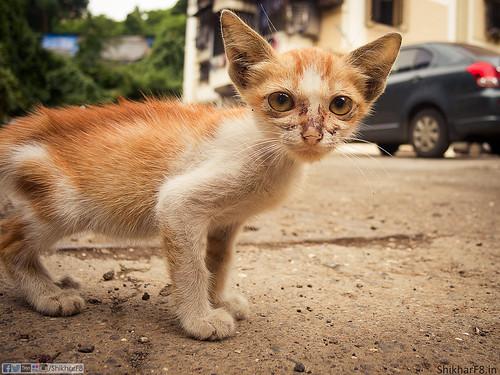 Tender Kitten