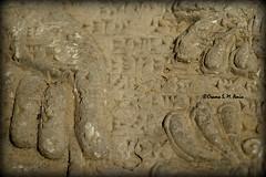 Deatail of a wall relief, North-West Palace (Assyria, Babylon, Akkad, Sumer...) Tags: bucket nikon iraq nineveh mesopotamia kurdistan alabaster sacredtree wallrelief ashurnasirpal nimrud kalhu apkallu calah standardinscription sulaimaniyamuseum