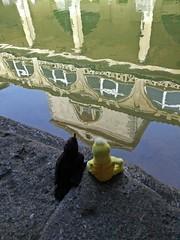 Swami & Minerva relaxing at ancient Roman bath - UK (ashabot) Tags: travel england reflections bath bluesky unesco georgian minerva swami romanbaths unitedkingdon historicalsites romanhistory worldheritagesites seetheworld swamiandminerva