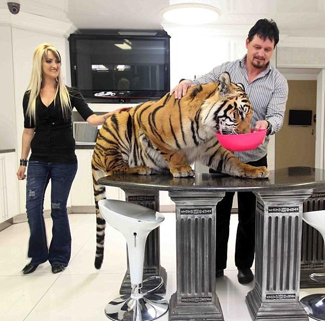 tigri6