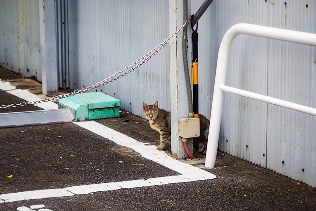 Today's Cat@2015-08-12