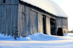 Barn Doors (Brian 104) Tags: barn doors winter snow open sunlight old barnboard