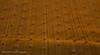 Rolled Gold (ajp~) Tags: haddington eastlothian scotland field bales strawbales farmland agriculture goldenhour goldenlight shadows canon 6d canon400mmf56l alanjohnstone