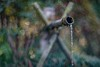 _DSC7706 (kymarto) Tags: dallmeyer supersix garden japan bamboo fountain bokeh bokehlicious park depthoffield