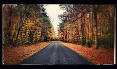 fall 2017 (Quiddity_Way) Tags: forest fall leaves countryroad delaware