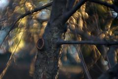 DSC06668 (www.em34.com) Tags: buschneokino 625170 emil bush ag 170mm neokino busch