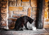 A Moment… (Daniela 59) Tags: challenge challengewithgary amoment cat blackcat bowl wall animal danielaruppel