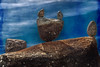 English Bay Beach (Vancouver BC, Canada) (*Ken Lane*) Tags: can geo:lat=4928390907 geo:lon=12314321458 geotagged vancouvernorthwestendstanleypark westend bc britishcolumbia britishcolumbiacanada canada canadiancity canadianseaportcity cityofvancouver ciudad coastalseaportcity gastown kanada northamerica pacificnorthwest seaportcity stad stadt vancouver vancouverbc vancouverbritishcolumbia vancouverbritishcolumbiacanada vancouvercanada vancouvercity vancouverite westcoast yvr ванкувер город канада カナダ シティ バンクーバー مدينة शहर เมือง แคนาดา 시티 캐나다 加拿大 市