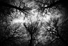 (Dagelijksbrood) Tags: 2016 europe belgium deurne antwerpen park forest woods tree trees blackwhite treesblackwhite treeblackwhite silhouet light dark afterdark night nightshooters noflash creative art bw monochrome creepy spooky d3300 1855mvrii 1855vrii vrii 1855mm kitlens nikon nikkor new digital eerie flickr noiretblanc zwartwit whitesky sky nature