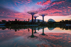Morning Glory (- Etude -) Tags: singapore gardensbythebay zachchang sunrise morning sony a7ii landscape cityscape reflection