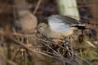 Mourning Dove Yoga