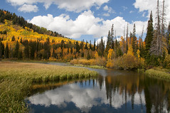 Autumn at Silver Lake, Utah (Devon Sanderson) Tags: autumncolor quakingaspen alpinefir mountainscenery mountainlake fallcolors fallleaves clouds reflection