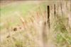 Fence (Atrista Vig ) Tags: background fence fences gras grass hintergrund medow outdoor slta99v sony sonya99 sonyalpha99 tamronsal70300mmf456ssm unscharf unschärfe wiese zaun