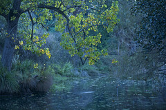 Its twilight time...... (setoboonhong) Tags: autumn light nature leaves garden botanical twilight pond time outdoor dusk low melbourne ornamental platters the