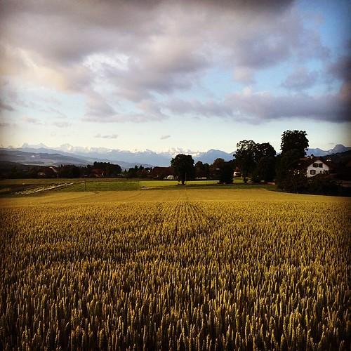 good morning switzerland