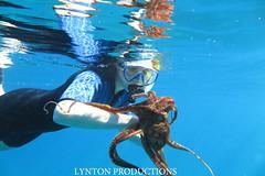 tako snorekl (Aaron Lynton) Tags: ocean blue water canon hawaii snorkel dive diving maui snorkeling octopus tako g1x lyntonproductions
