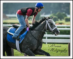 McLaughlin Trainee (EASY GOER) Tags: summer vacation horses horse ny newyork tourism sports beauty race canon fun athletics track saratoga competition upstate running racing course event 5d ponies athletes tradition races sporting spa thoroughbred equine exciting thoroughbreds compete markiii equines
