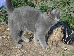 Uno o due?? (antonè) Tags: gattini gemelli stintino