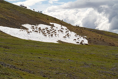 The Caribou on Our Left MoOving Out Too (jpmckenna - Tenquille Lake Up Next) Tags: alaska denali denalinationalpark landscape unit11 backpacking getoutside mountain caribou unit12