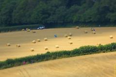 Figures in a field (Allan Jones Photographer) Tags: hay bales haybales straw field fields farmland people figures tiltshifteffect modelvillageeffect toytown photoshop allanjonesphotographer canon5d3 canonef24105mmf4lisusm